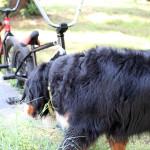Shaka guarding the bikes